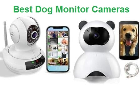 Top 15 Best Dog Monitor Cameras in 2019